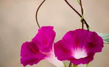 教你简单几步的拍出美丽的花儿