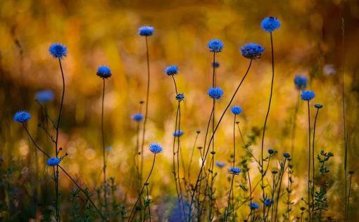同样是拍花,这个女摄影师却把花拍成了画